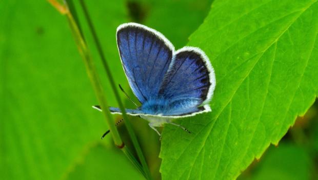Фотограф из Ленобласти показала разноцветных бабочек